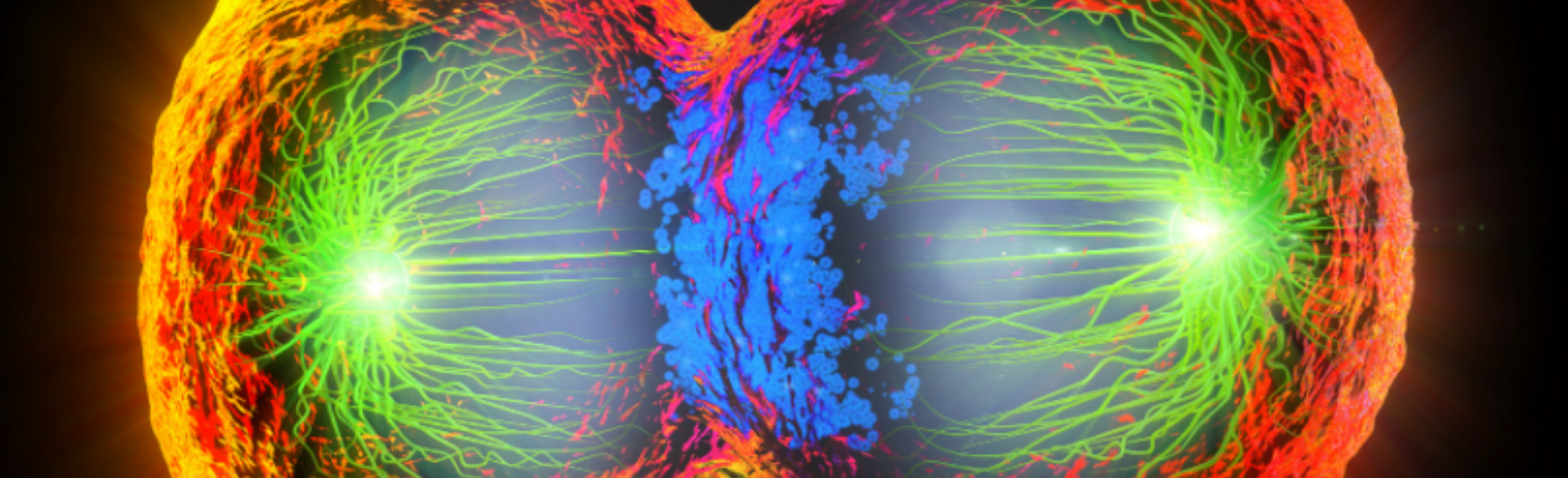 New Insight Into How Cancer Spreads