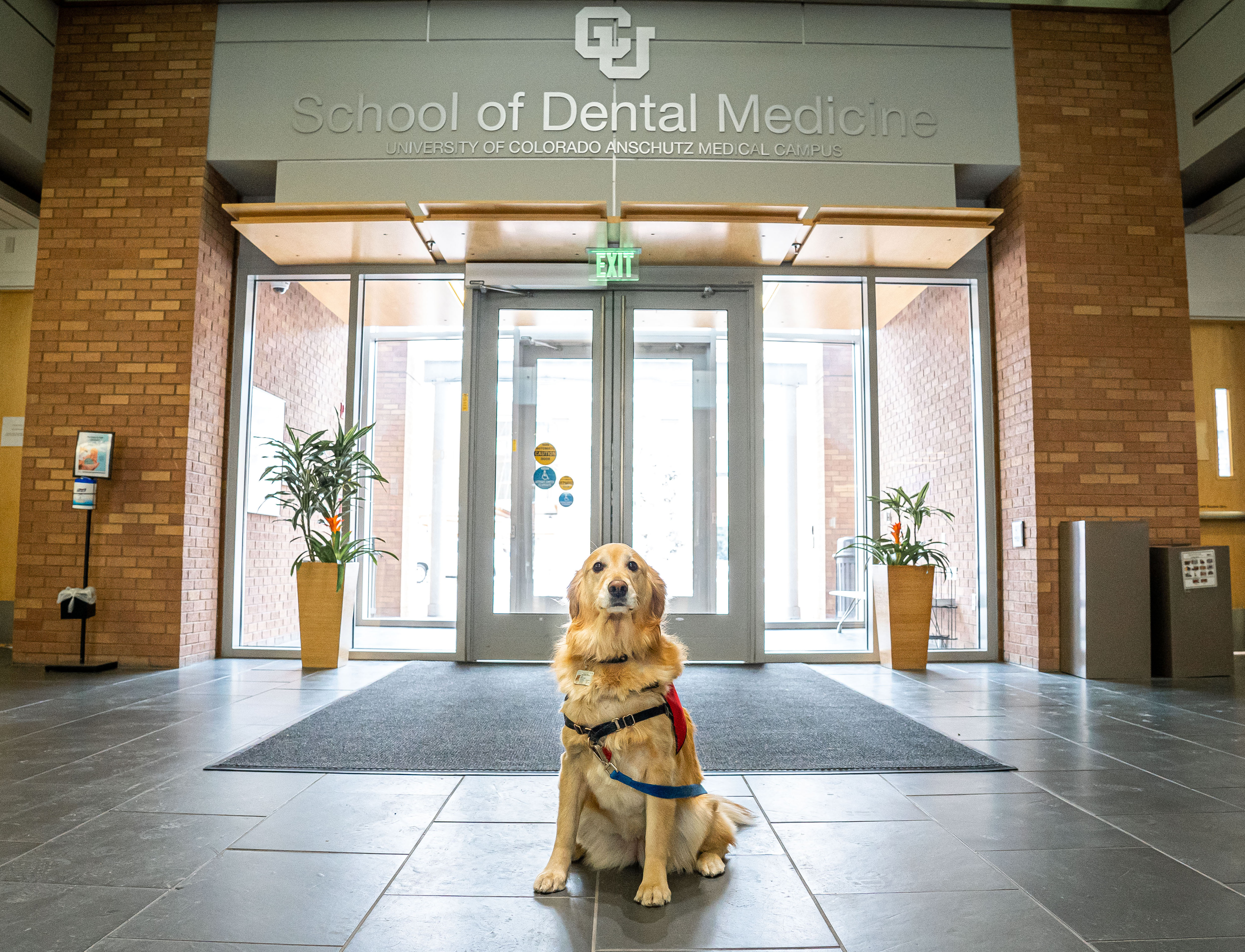 DogTherapyDog&Entry