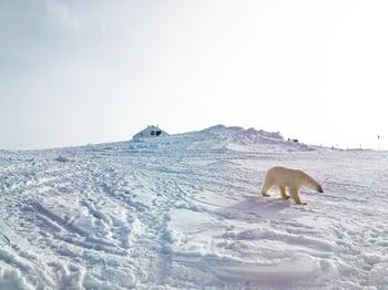 Greenland - 4