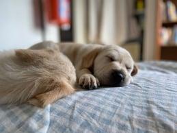 foster_puppy6